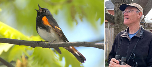 Spring Birding and the Upcoming Ontario Breeding Bird Atlas with Mike Cadman