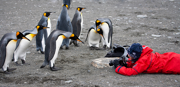One Ocean Expeditions penguin photography