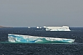 Icebergs calving from Arctic glaciers to the far north make their way down the coast of Labrador. This will be a great time to see them! (photo: Dave Milsom)