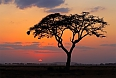 Sunset with silhouetted African Acacia tree