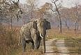 A highlight of Kaziranga is the chance to see wild Asian Elephants.