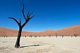 We will see the long-dead trees at Deadvlei, a former riverbed cut off from its seasonal water supply by drifing dunes. (photo: Justin Peter)