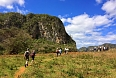 Our walks allow us to explore the unique habitats of Viñales. (photo: Josh Vandermeulen)