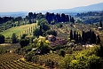Tuscan farm vineyard in San Gimignano