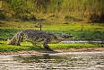 Crocodile in Liwonde National Park